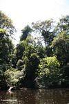 Vegetation along the Tahan River