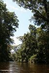 Tahan River forest -- malaysia0552