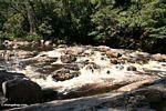 Rapids on the Tahan River -- malaysia0641