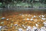 Tahan River -- malaysia0692