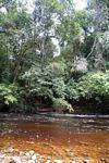The blackwater Tahan River