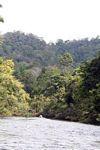 Tahan River -- malaysia0779