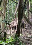 Orang asli settlement in the rainforest -- malaysia0901