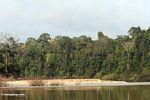 Riverside jungle