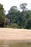 Soccer field on a rainforest beach