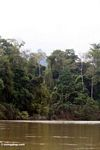 Rainforest and the Tembeling River -- malaysia1205