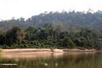 Rainforest along the Tembeling River -- malaysia1214