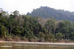 Rainforest along the Tembeling River -- malaysia1215