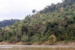 Rainforest along the Tembeling River -- malaysia1239