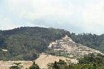 Rainforest mine