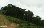 Deforestation for oil palm -- malaysia1288